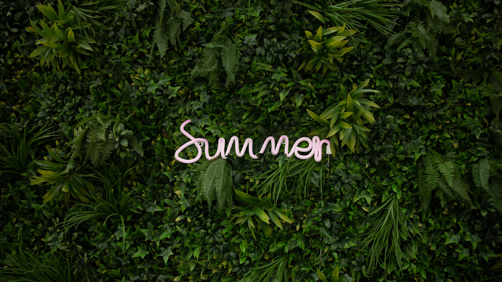 Cool Summer Wallpaper Ideas to Give Fresh Feel