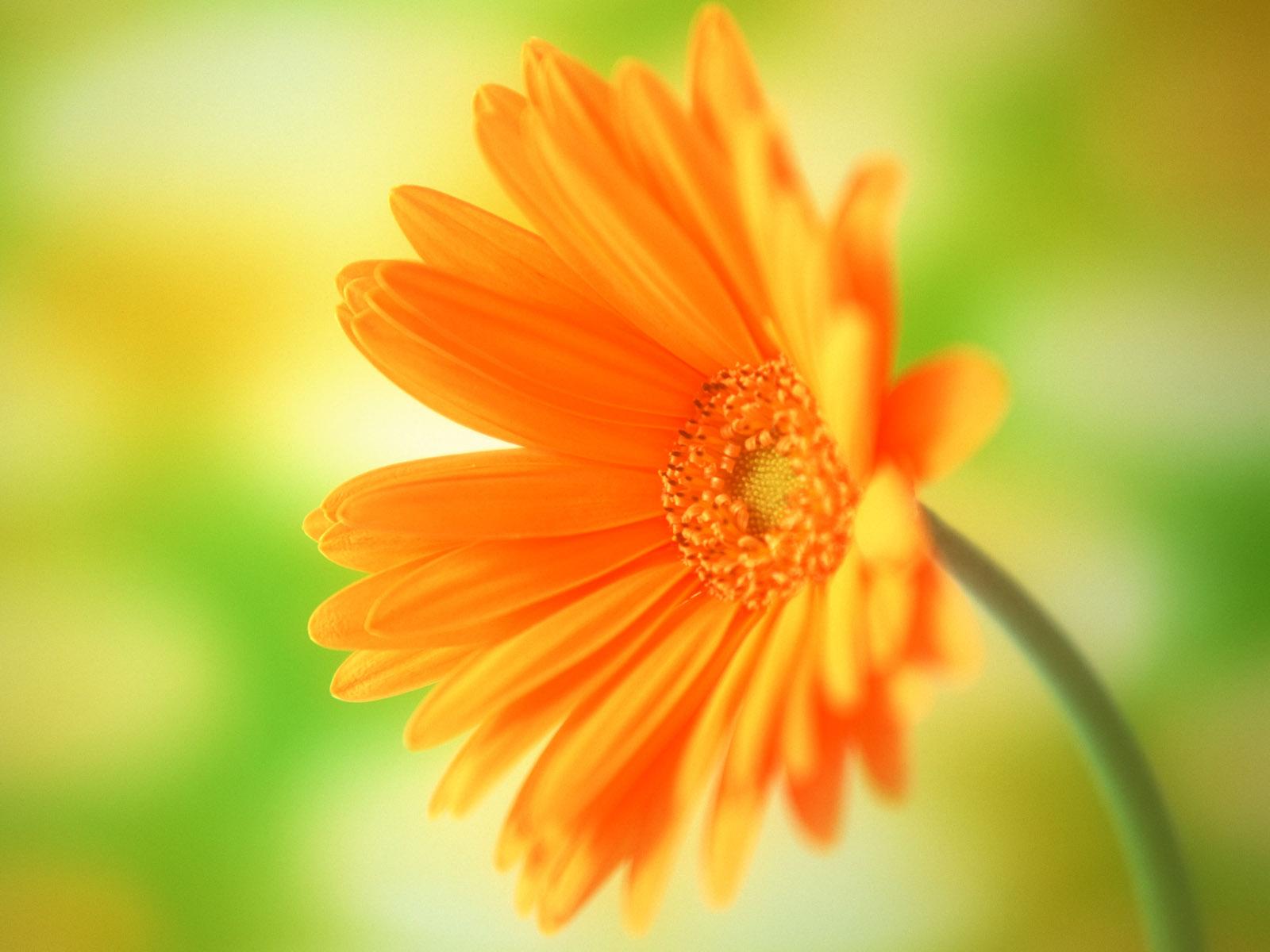 50+ Mesmerizing Flower Wallpaper ideas: Explore your Love for Flower