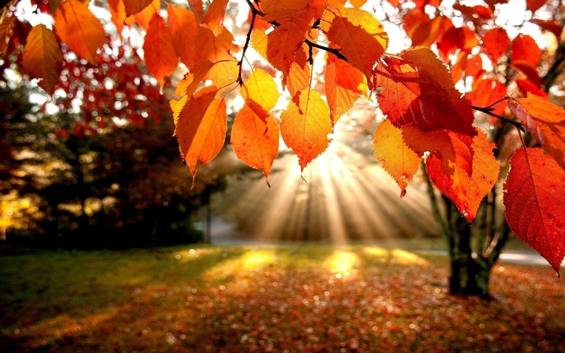 How to Use Autumn Wallpaper to Make Your Home Look Great