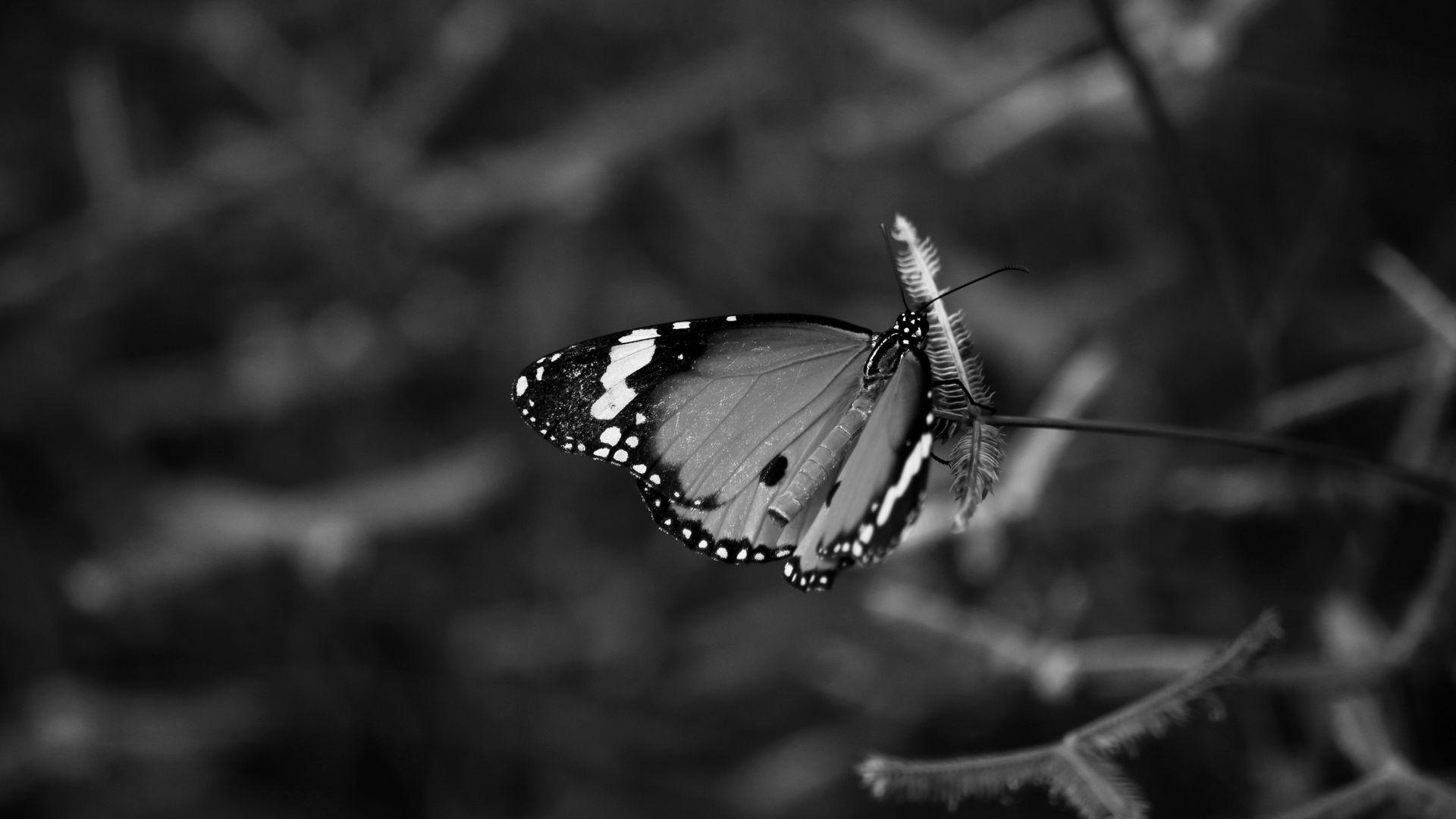 Tips on Choosing Beautiful Butterfly Wallpaper