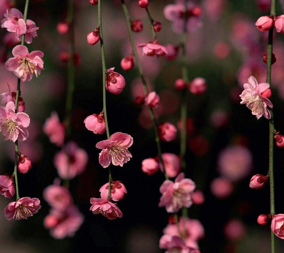 What You Should Know About Flower Wallpaper