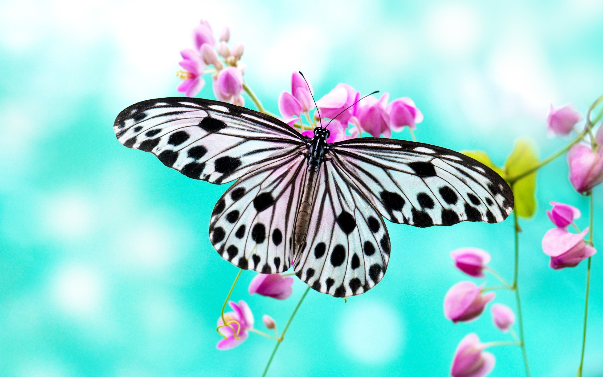 Butterfly Wallpaper – A Wonderful Addition to Any Room