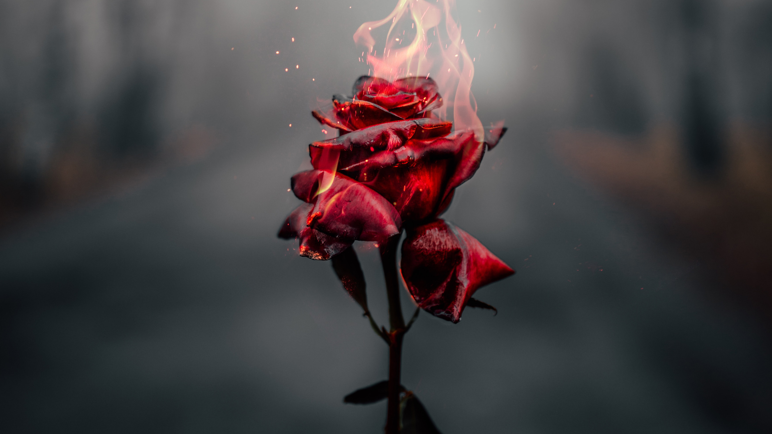 Why Use A Rose Wallpaper For Your Phone?