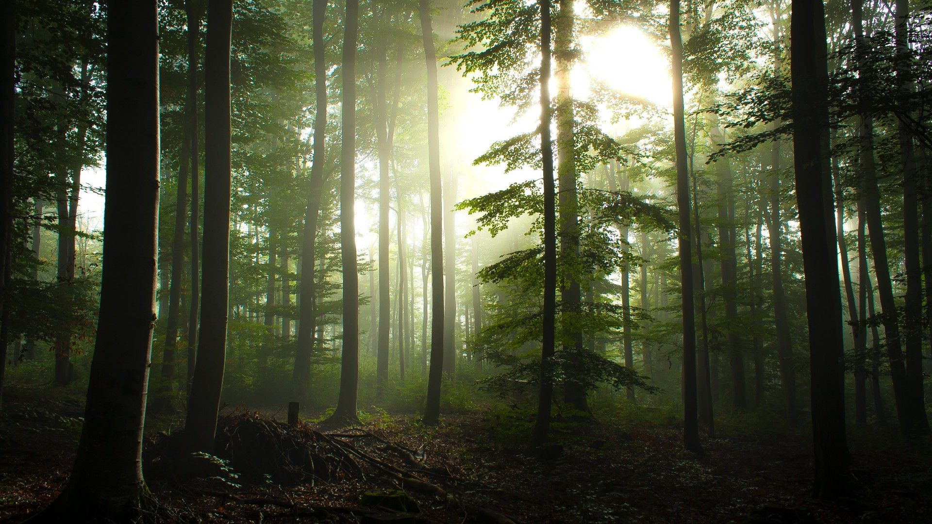 How to Choose the Perfect Forest Wallpaper