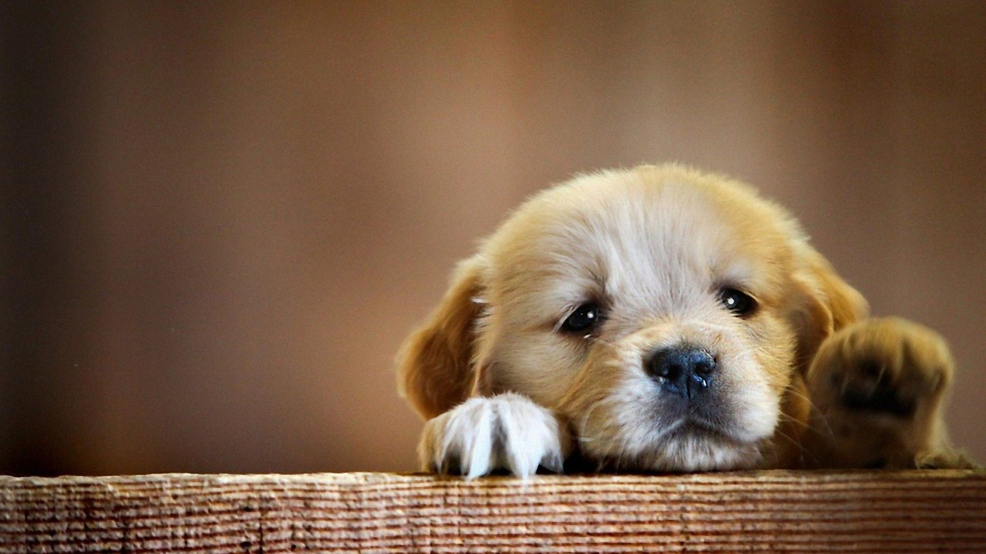 New Puppy wallpaper and Newbie site