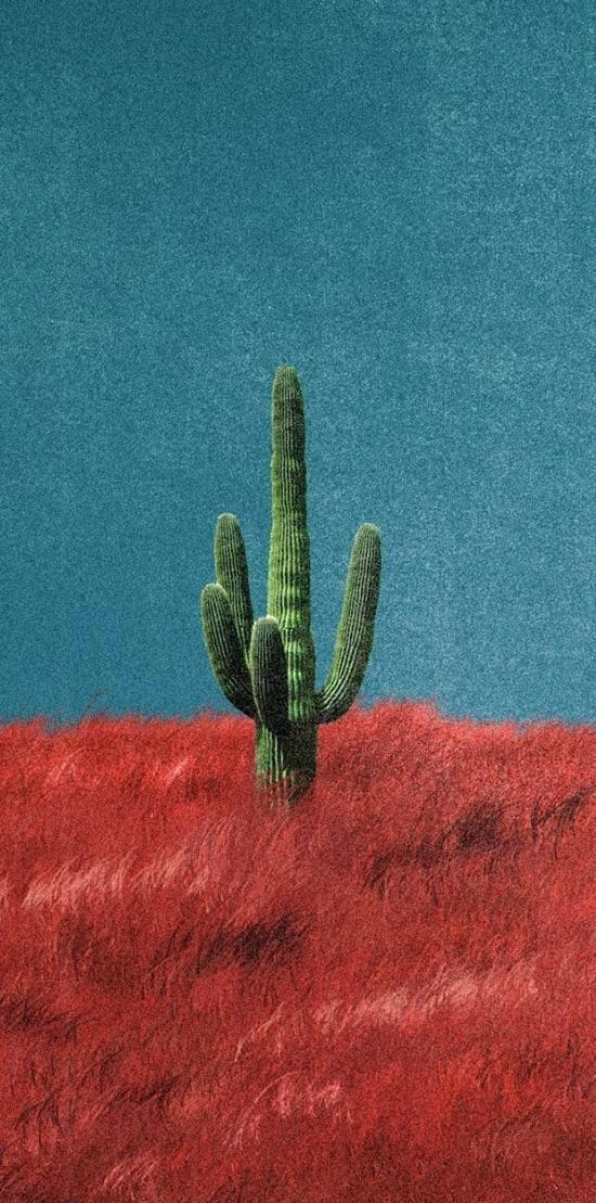 Cactus Jack Wallpaper Is a Great Choice For Your Home