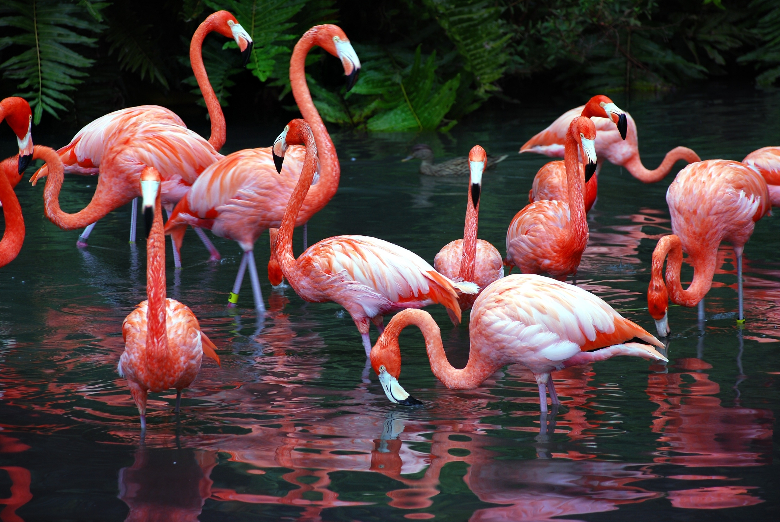 FLAMINGOS Image – The Perfect Image For Attractive