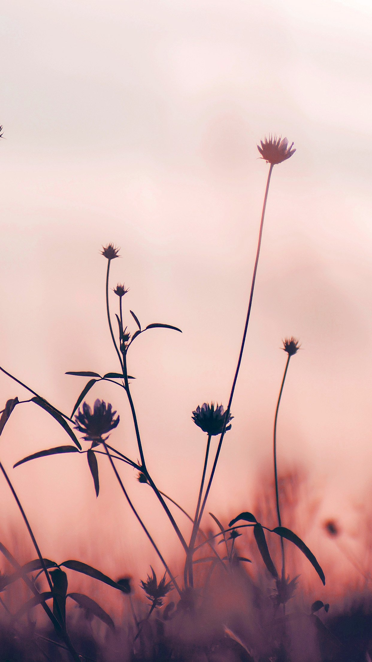 Where to Find Flower Wallpaper For Your iPhone?
