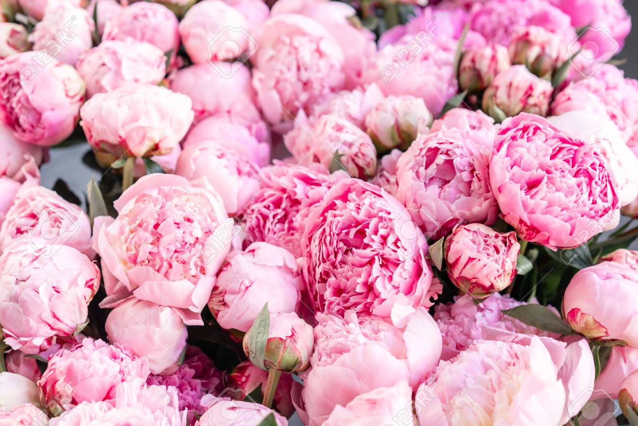 Peony Wallpaper – The Perfect Wedding Background