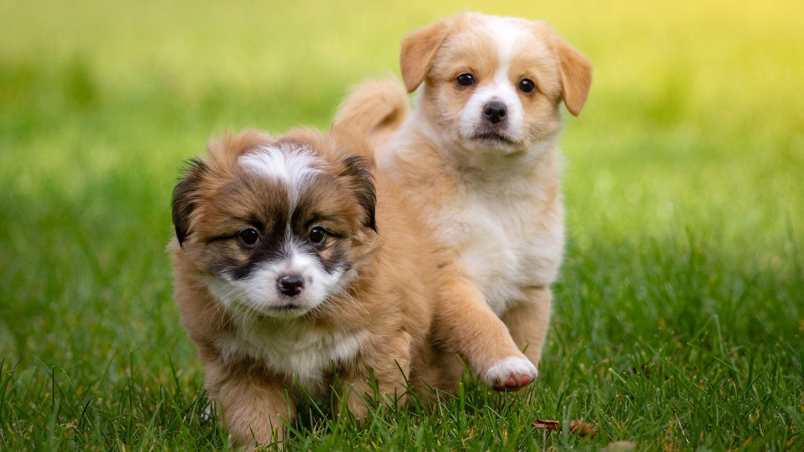 Decorate Your Home With Wallpaper of Cute Puppies