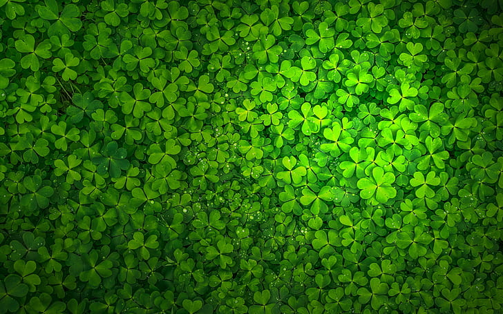 St Patricks Day Wallpaper And Wall Stickers – What's The Story Behind It?
