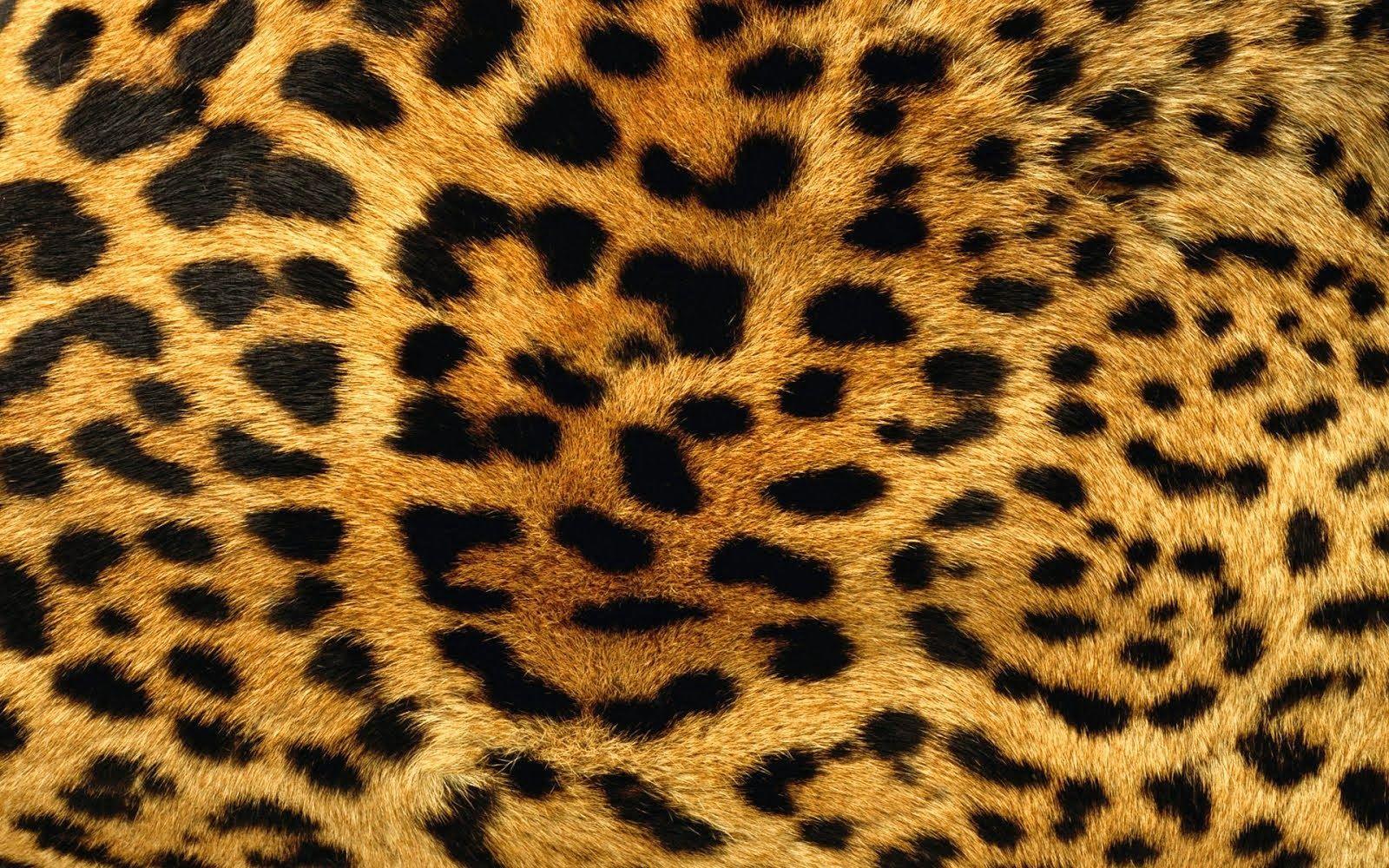 A Unique Wallpaper Design For Your Cheetah Print Wall