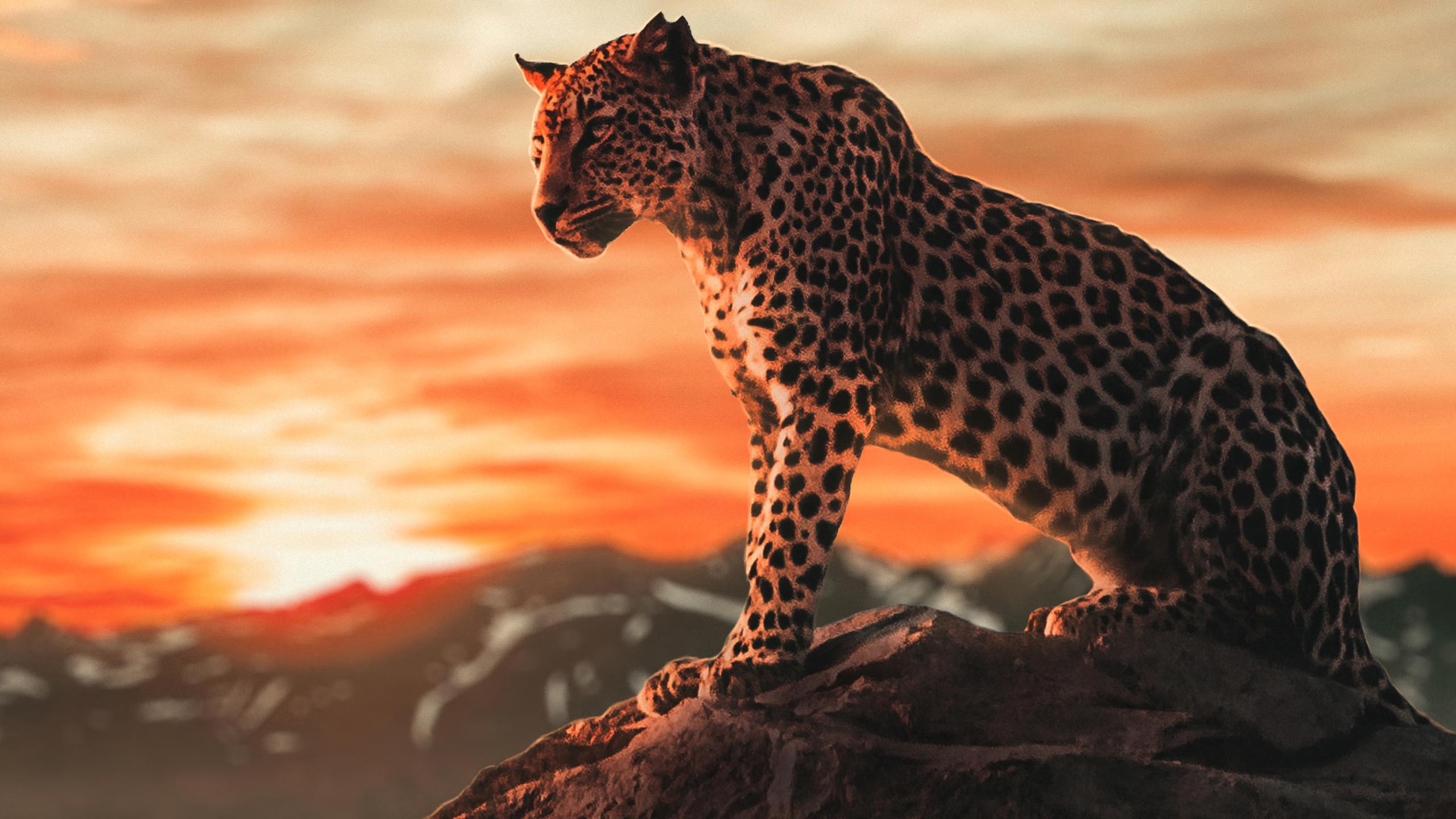 Cheetah Wallpaper For Cheetahs Fans