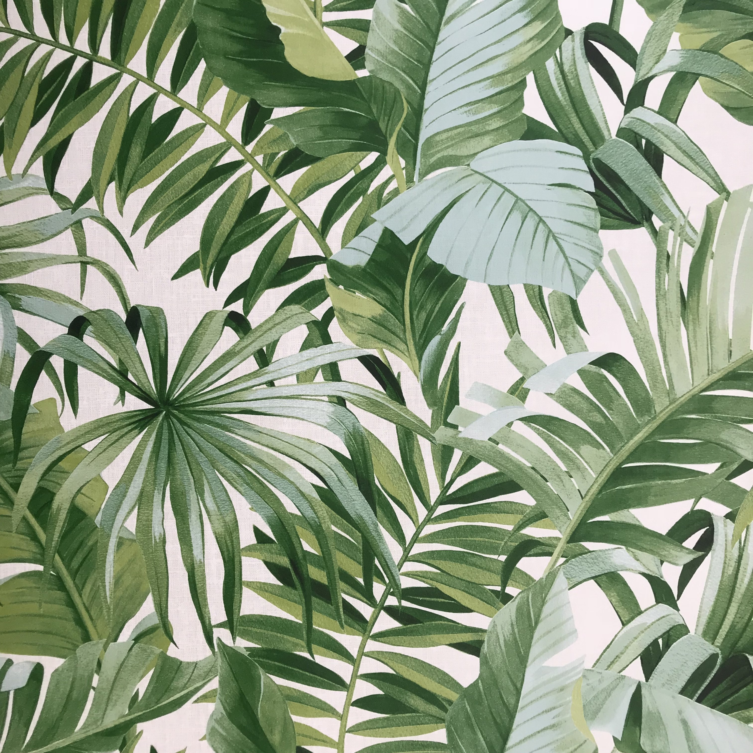 Palm Leaf Wallpaper – Impressive And Beautiful Wallpaper Theme