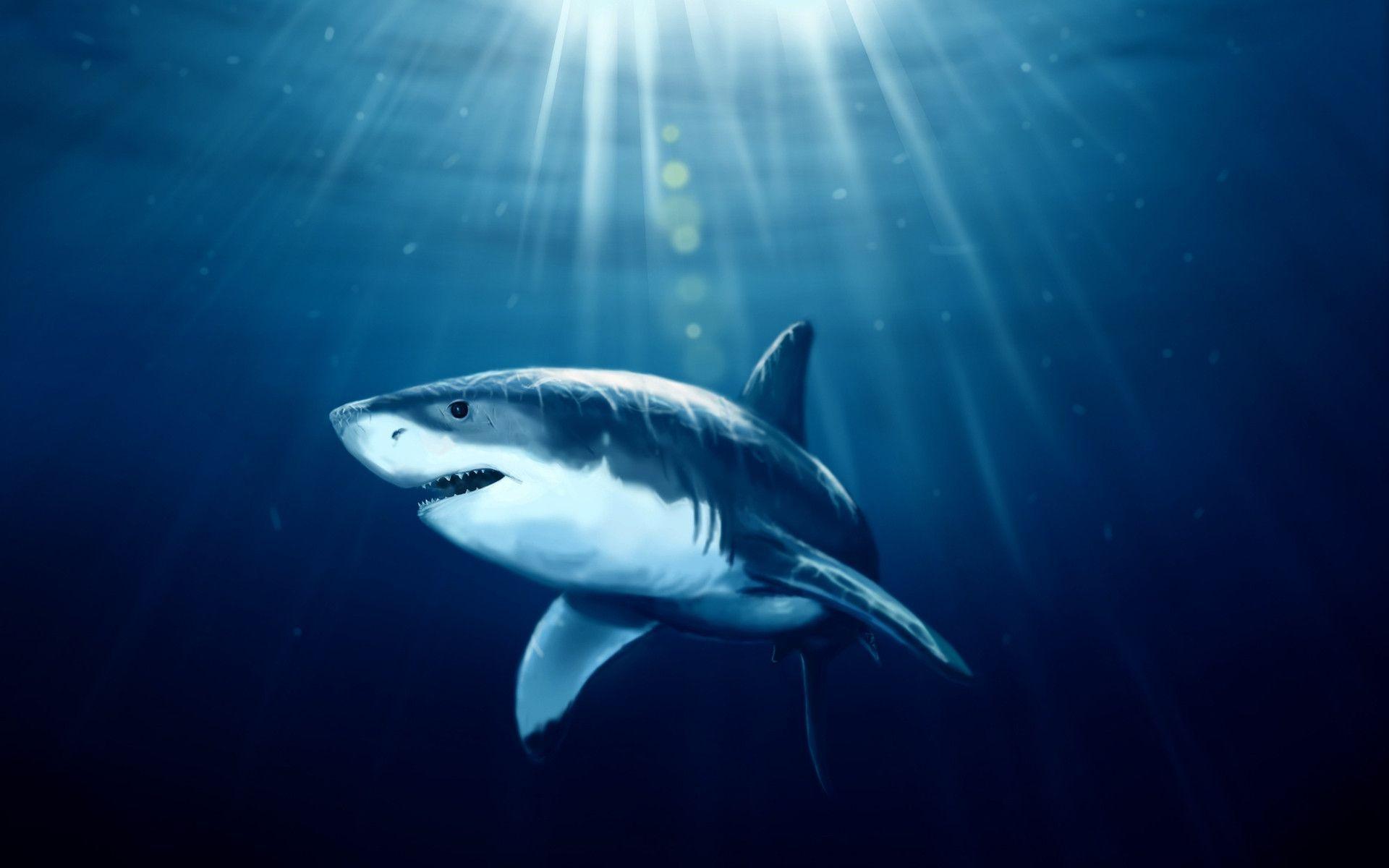 Shark Wallpaper – A Unique Wallpaper That Adds Life To Your Desktop