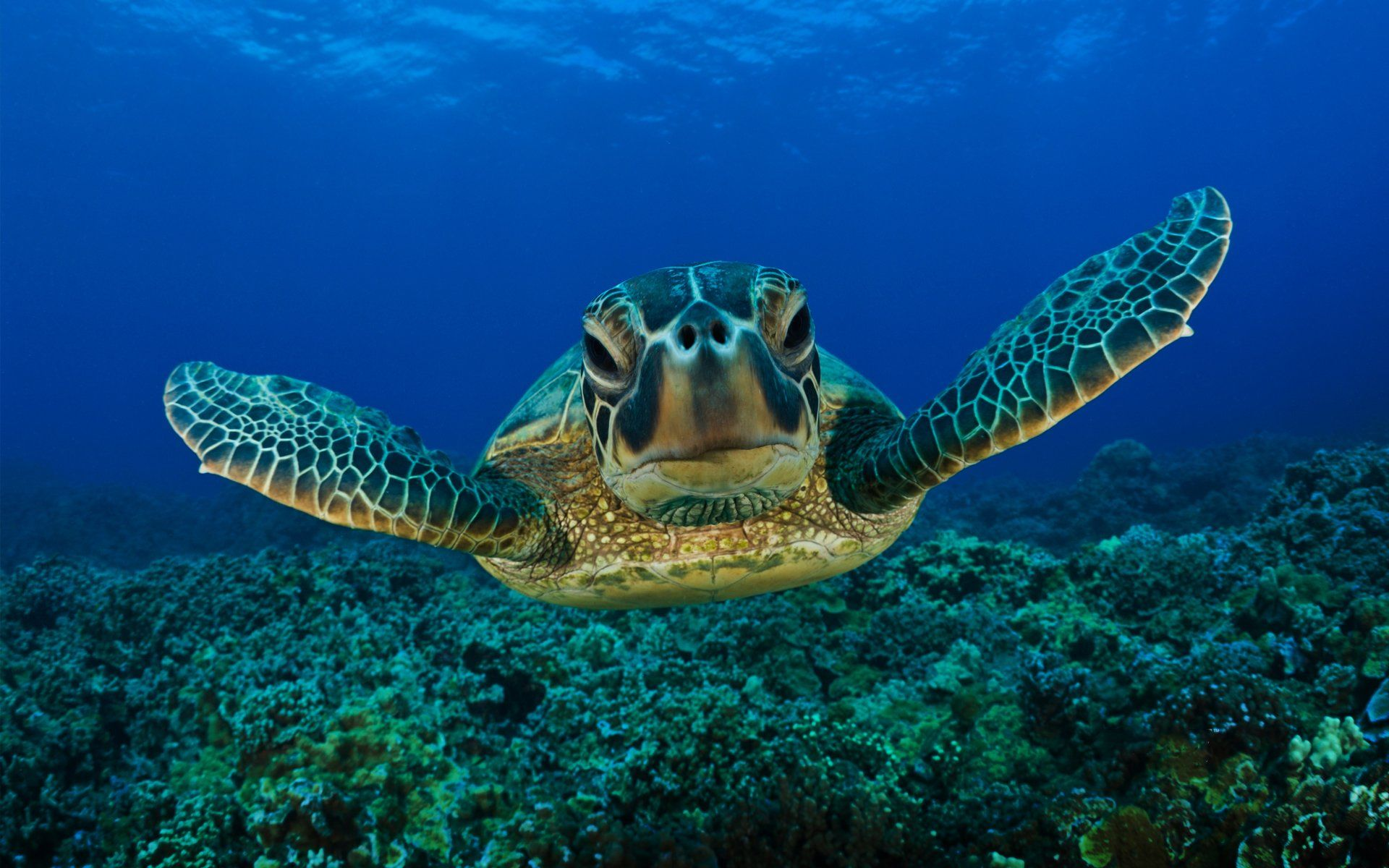 Unique Wallpaper – A Natural Trend Among Turtles