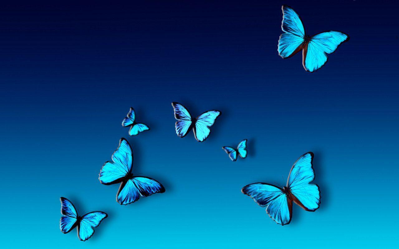 Choose the Best Design Ideas of Blue Butterfly Wallpaper
