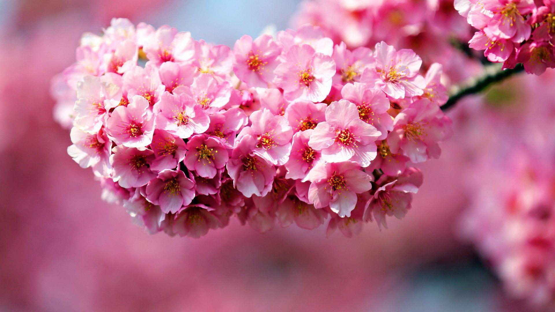 Beautiful Pink Flower Wallpaper Designs