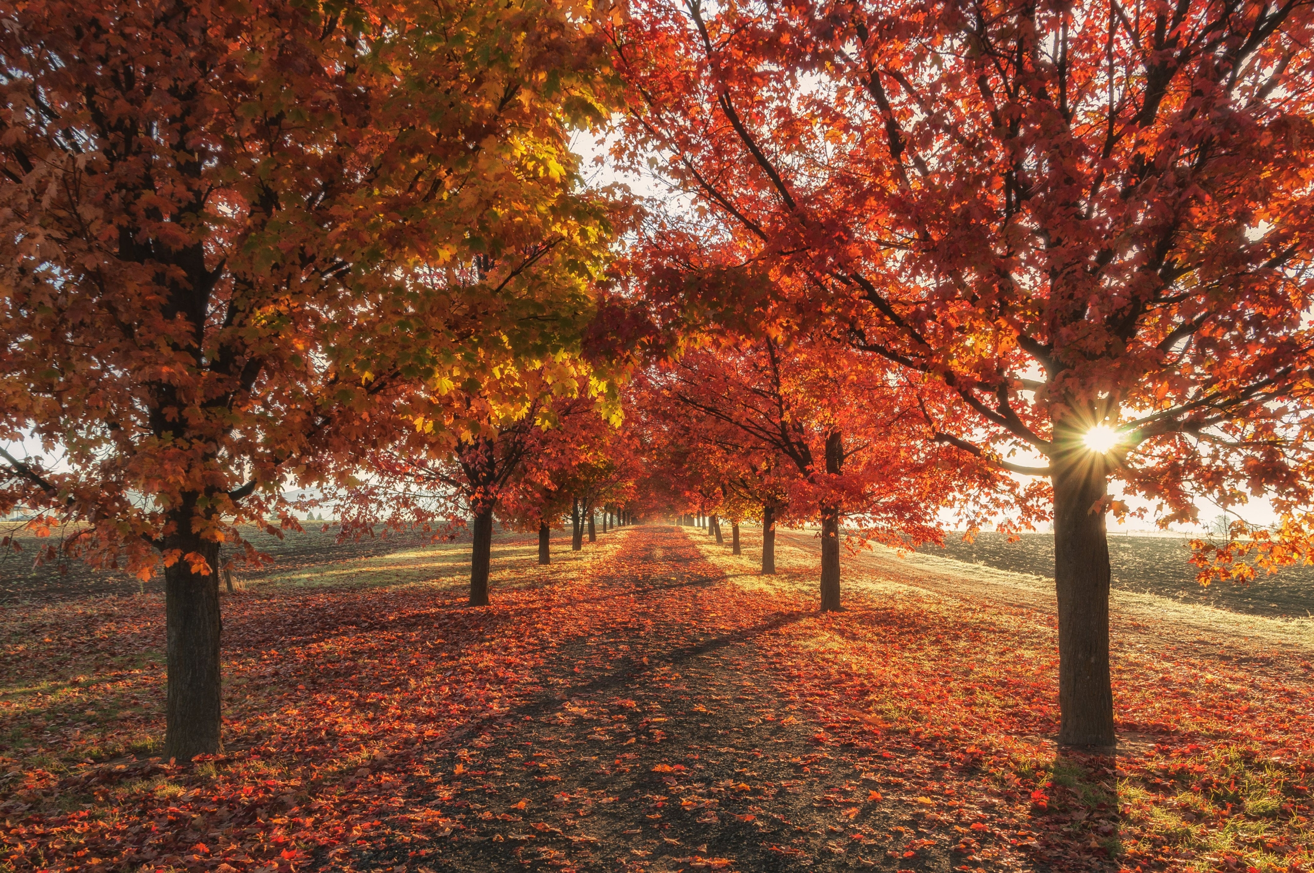 4K Autumn Wallpaper – Cool Decorative Wallpapers For Fall