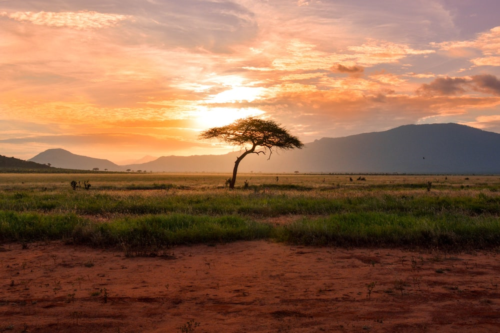 Best Free africa wallpaper for Your Computer
