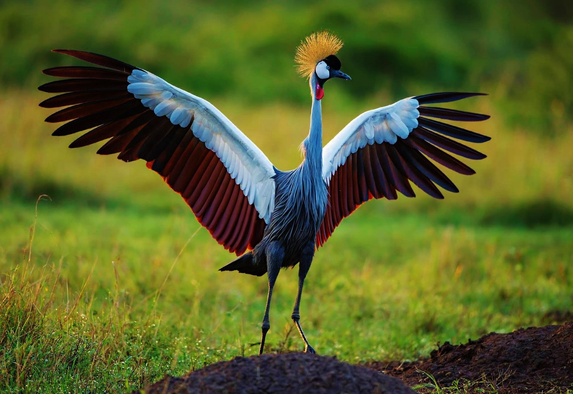 How To Find The Best Crane Wallpaper