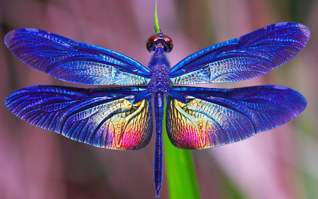 How to Choose the Right Dragonfly Wallpaper Background for Your Computer