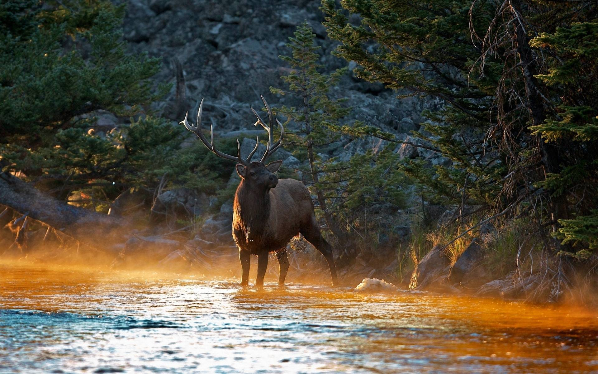 Elk Picture designs – Learn the Tips Here!