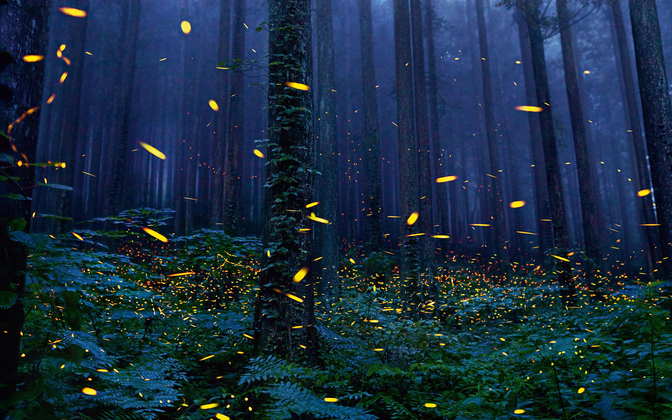 Firefly Wallpaper – Best background Modern Design