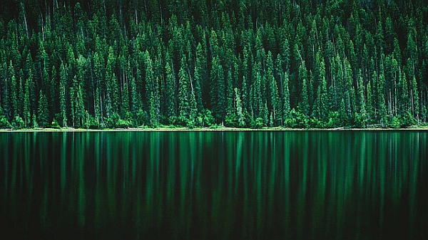 The Best Free Green Forest Wallpapers For Your Computer Or Cell Phone