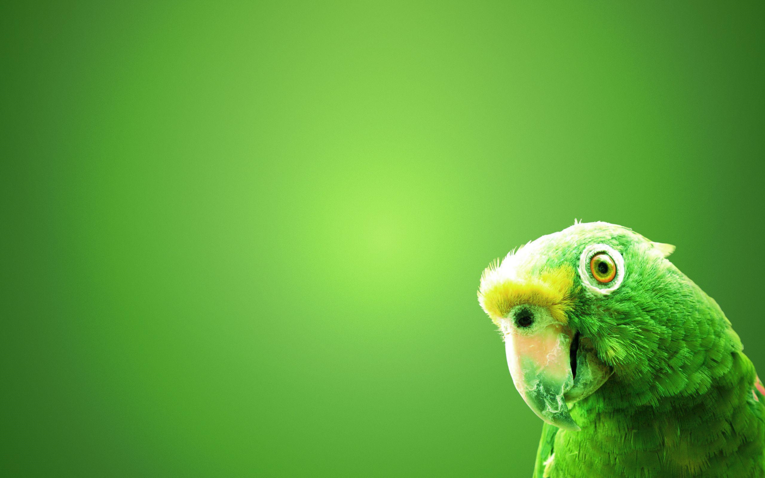 Green Screen Wallpaper – An Image Productizer's Best Friend