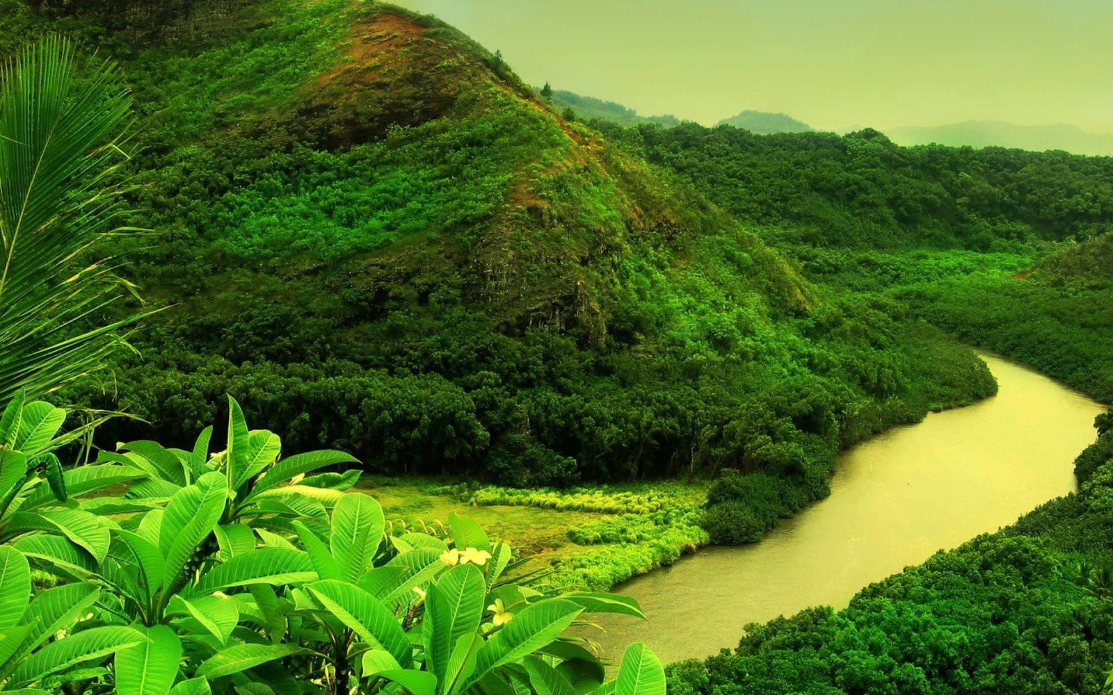 Greenery Wallpaper – Add A Green Background To Your Room Or Space