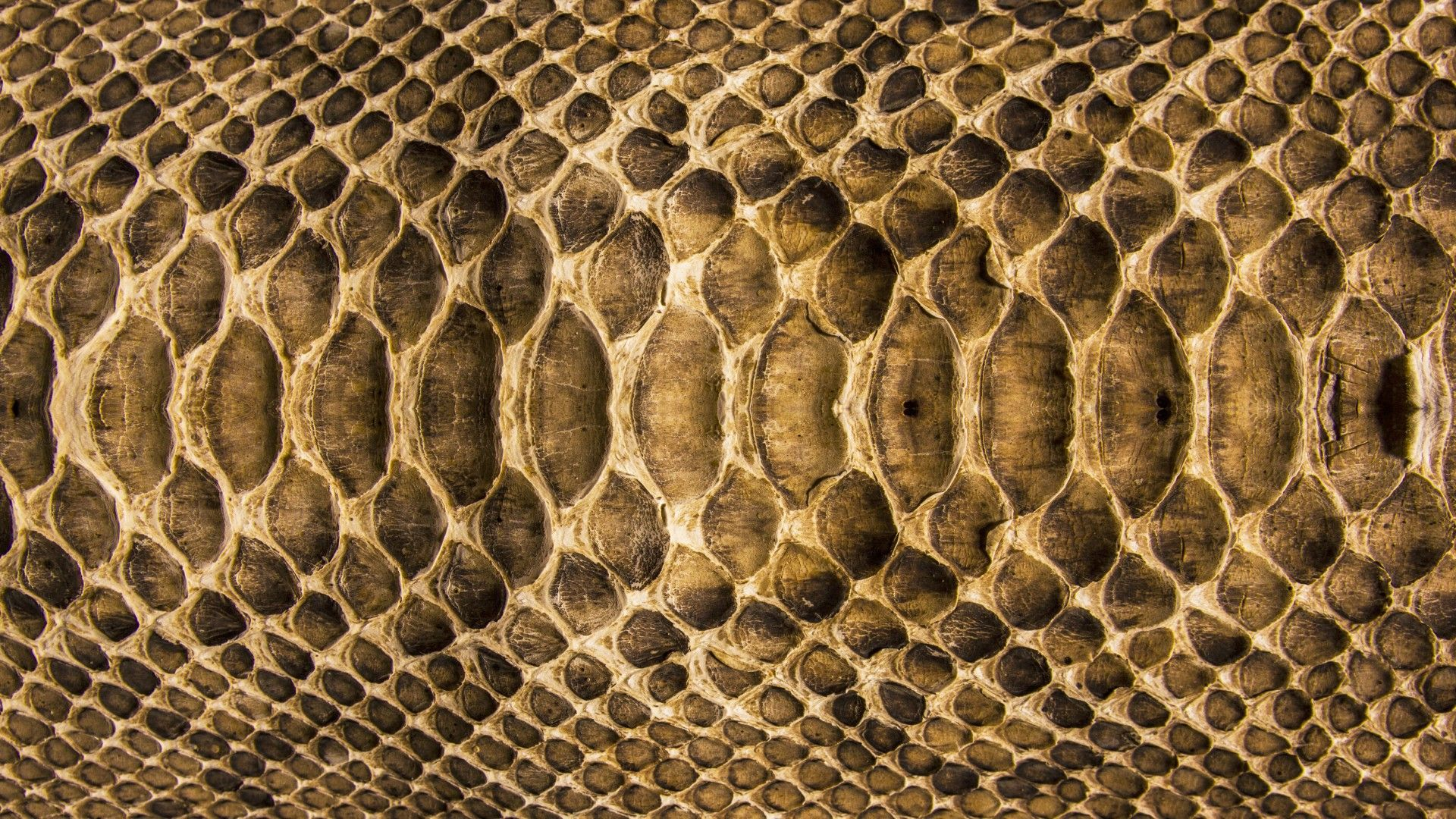Snakeskin Wallpaper – Find Out Why It Is So Cool