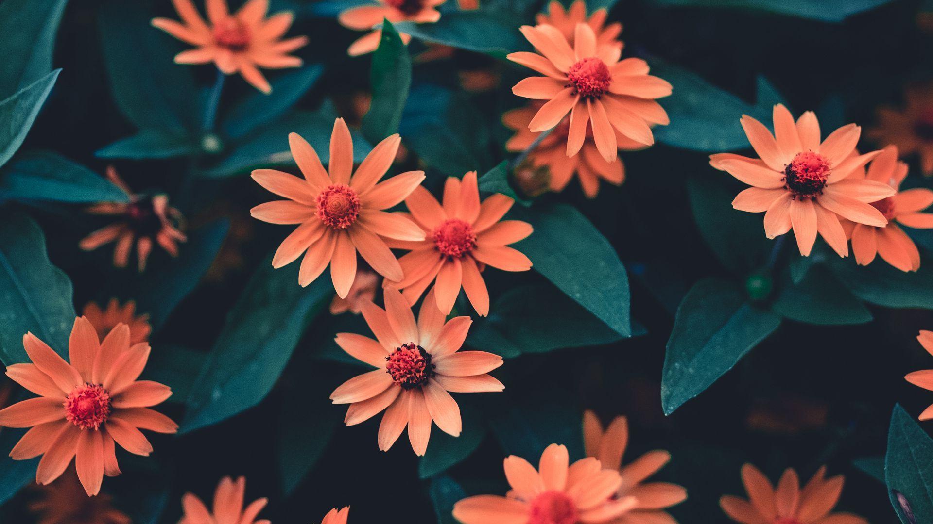 Beautiful Aesthetic Flowers Wallpaper
