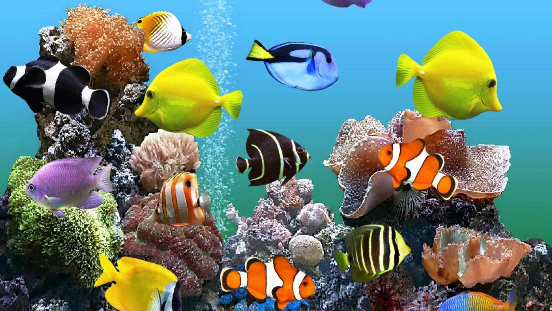 The Best 3D Aquarium Wallpaper