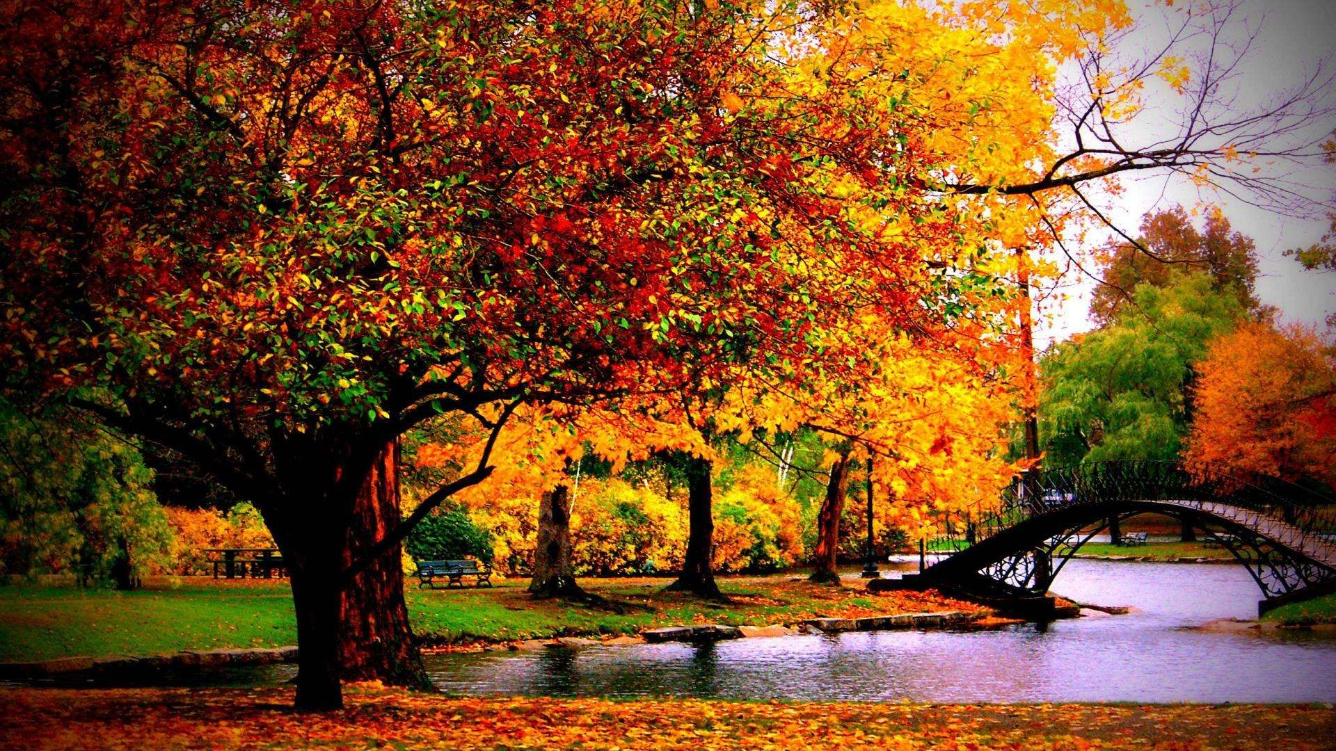 Fall Desktop wallpaper – Create Your Computers Ambiance