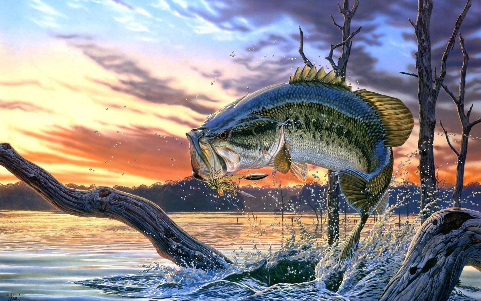 Bass Fishing Wallpaper – Style And Function Rolled Into One