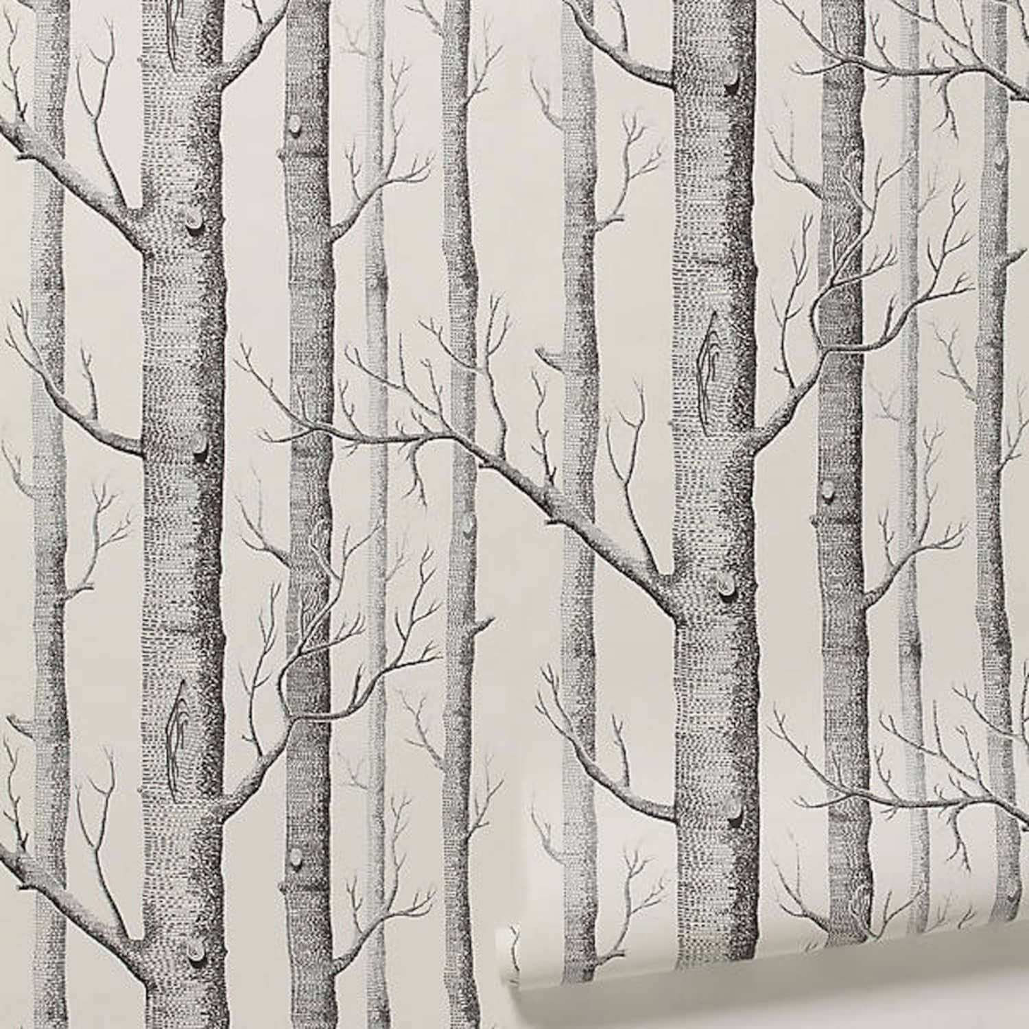 Birch Tree Wallpaper – Why This Cool wallpaper Decorating Style Is So Popular