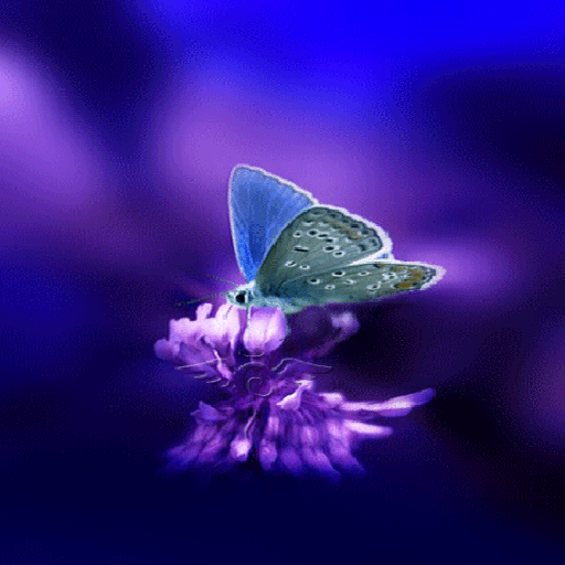 Using Butterfly Live Wallpaper to Enhance Your Computer Screen