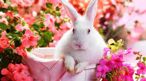 Cute Bunny Wallpaper Design