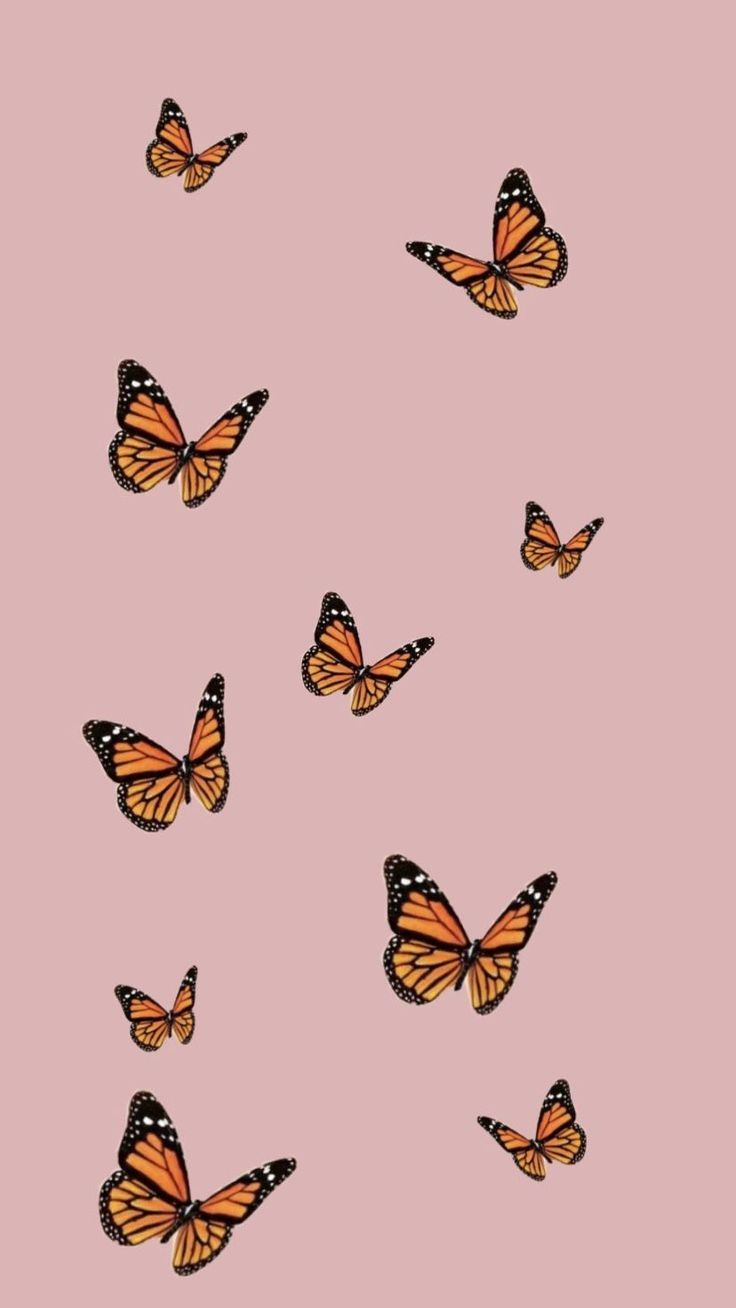 Cute Butterfly Background for Your New iPhone