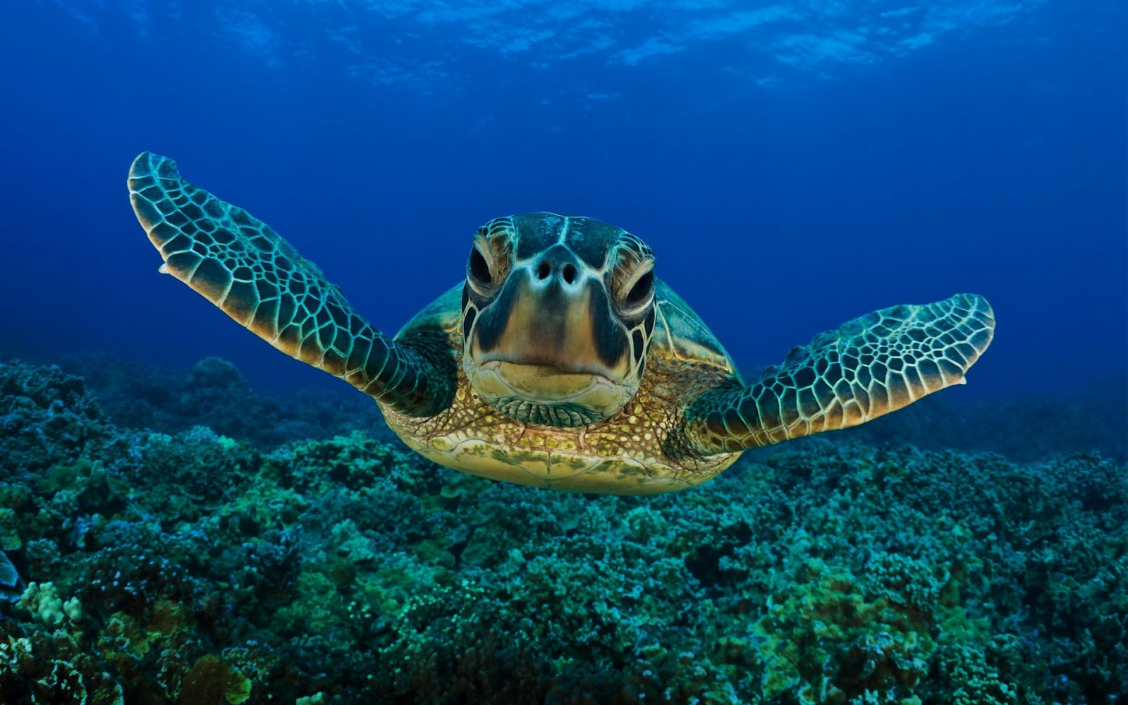 Cool Cute Turtle Background for Your Smartphone