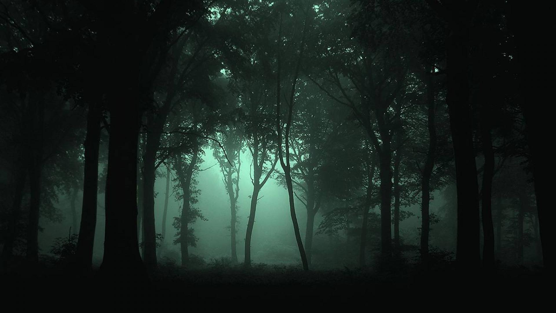 Dark Forest Wallpaper For Desktop