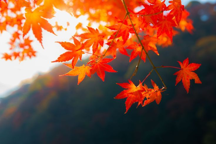 How To Download The Latest Fall Wallpaper Images