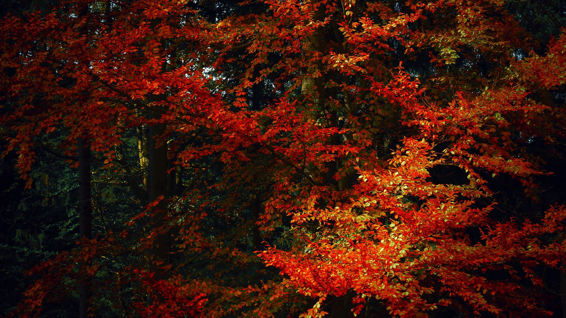 Fall Leaves Wallpaper – 3d's Pictures of Autumn Leaves on Desktop Picture designs