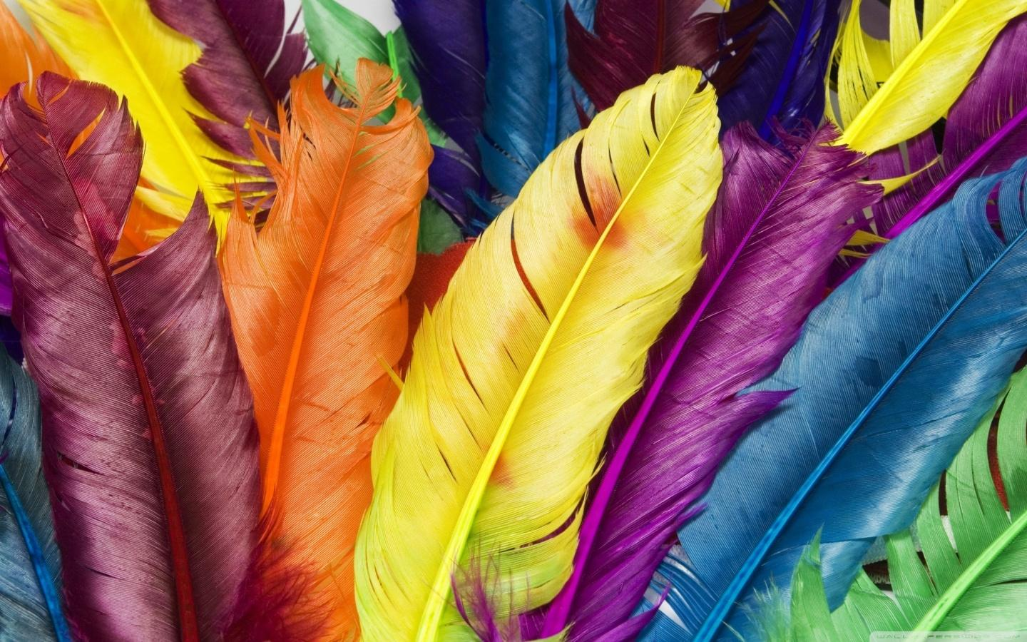 Feather Wallpaper – The Best background in Modern Design