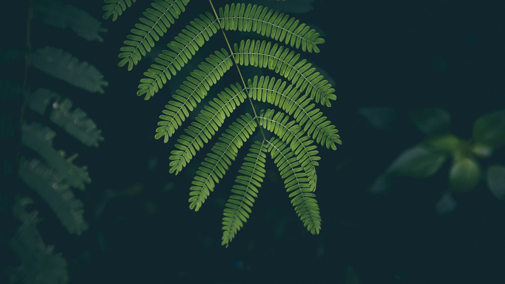 Great Fern Wallpaper
