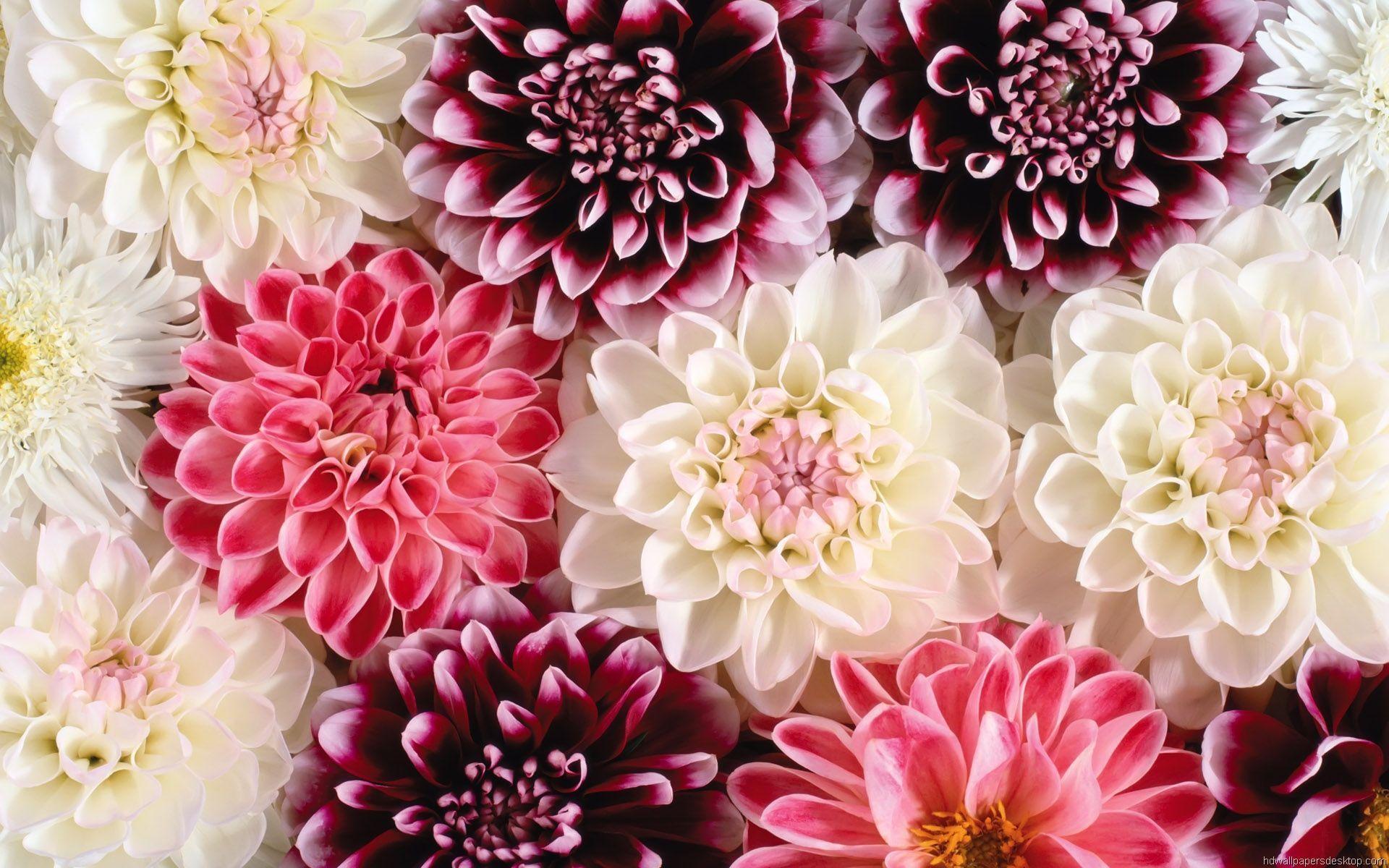 Floral wallpaper Nursery Themes