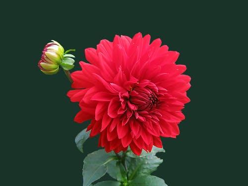 Flower Images Wallpaper – Enchanting Images For Your Desktop