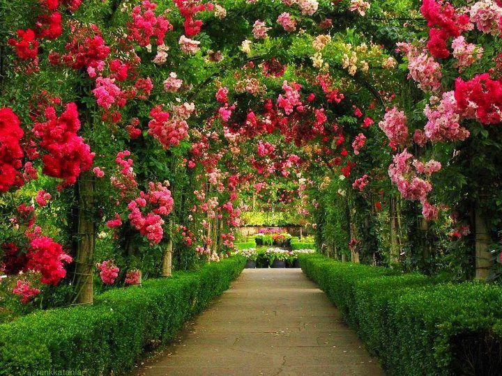 Garden Wallpaper – Modern Interior Design ideas