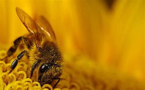 3D Honey Wallpaper Picture design – An Elegant Twist For Your Room